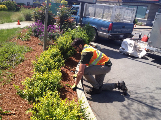 West Coast Evergreen Gardening: Property Maintenance